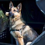 TowBox Dog V1 Black abierto con perro 03