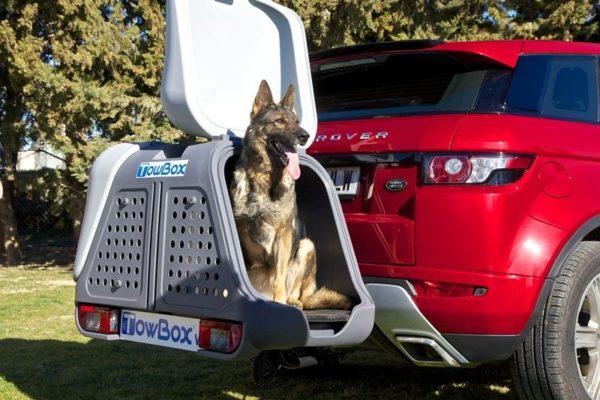 Towbox V2 DOG gris con perro