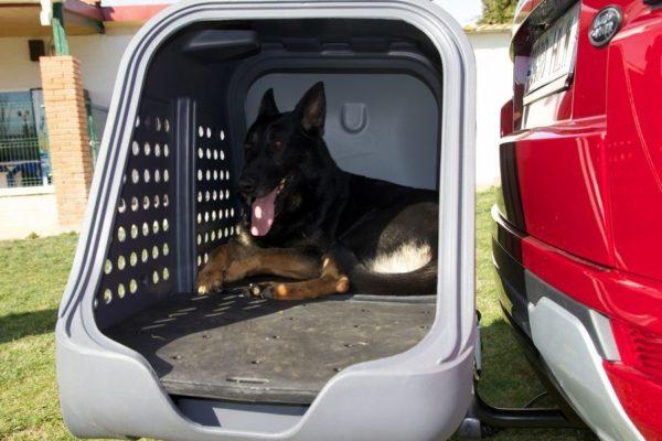 Perro-dentro-del-Towbox-V2-DOG