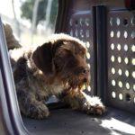 Vista interior TowBox V2 con perro dentro