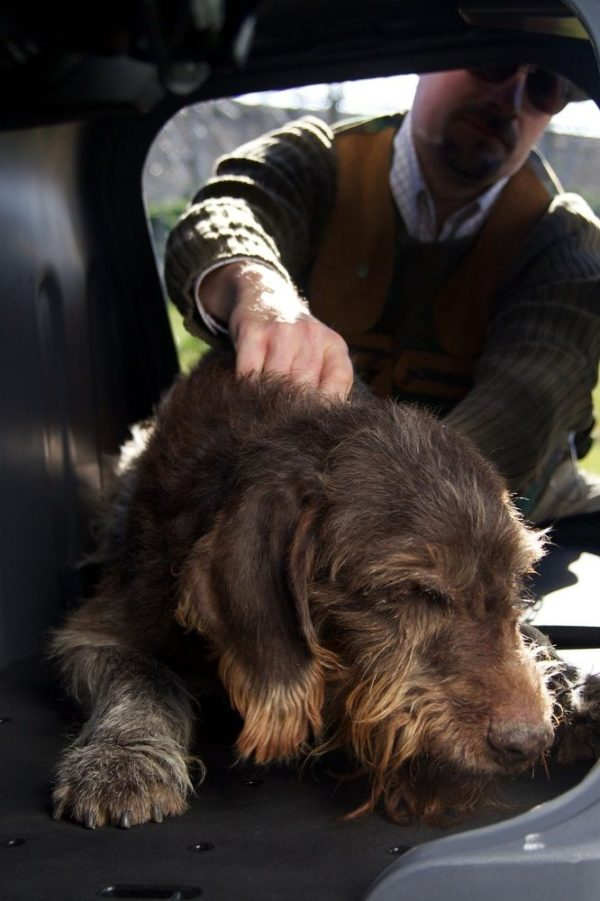 Perro-de-caza-dentro-del-Towbox-V2-DOG