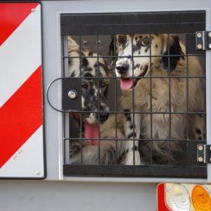 Puerta metálica Dog Carrier